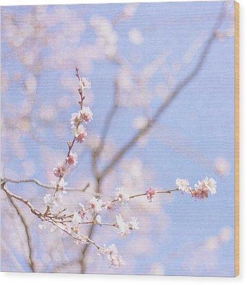 Winter Blossom Wood Print by Jill Ferry