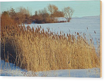 Winter Breeze Wood Print by Aimee L Maher Photography and Art Visit ALMGallerydotcom