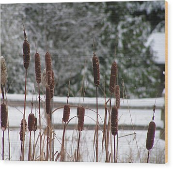 Winter Cattails Wood Print