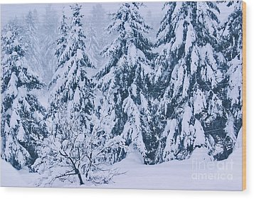 Winter Coat Wood Print by Aimelle