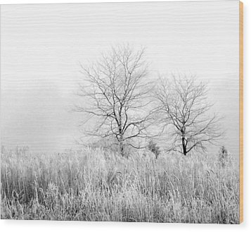 Winter Day Wood Print by Julie Palencia