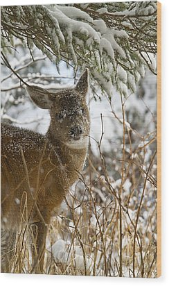 Winter Dining For A Black-tailed Deer Wood Print by Tim Grams