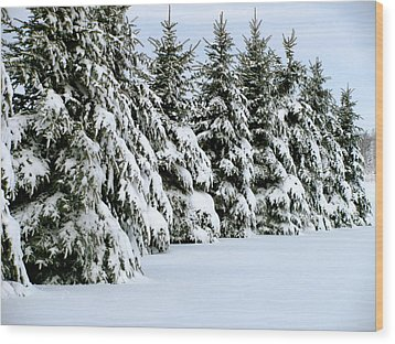 Winter Elegance Wood Print