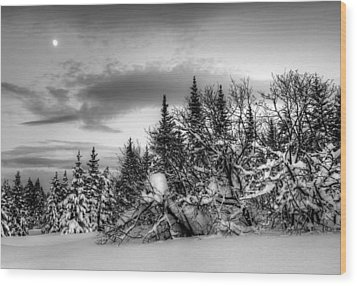 Winter Evening Wood Print by Michele Cornelius