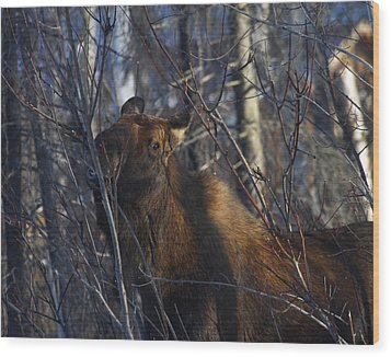 Wood Print featuring the photograph Winter Food by Doug Lloyd