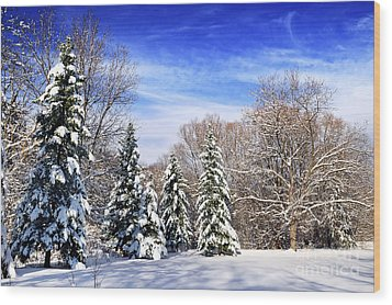 Winter Forest With Snow Wood Print by Elena Elisseeva