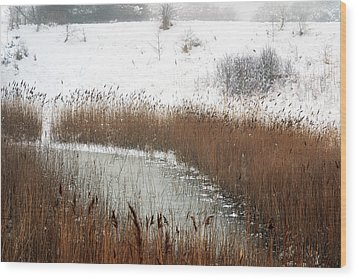 Winter Gold Wood Print by Terence Davis