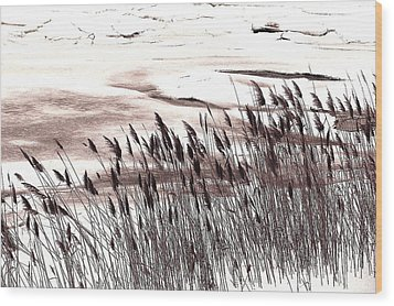 Winter Grasses Wood Print