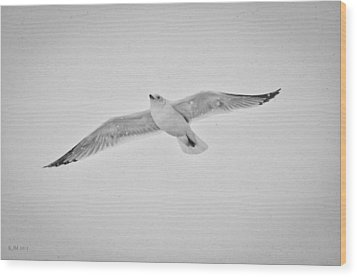 Wood Print featuring the photograph Winter Gull by Kevin Munro