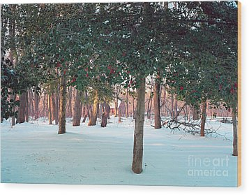 Winter Holly Wood Print by George Oze