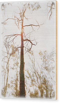 Winter In The Woodlands Wood Print by Erica Horsley
