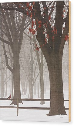 Winter In The Woods Wood Print by Tom York Images