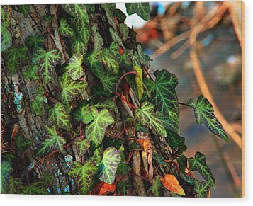 Wood Print featuring the photograph Winter Ivy by Mike Flynn