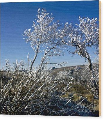 Winter Landscape.  Auvergne. France Wood Print by Bernard Jaubert