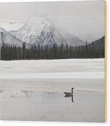 Winter Landscape, Banff National Park Wood Print by Keith Levit