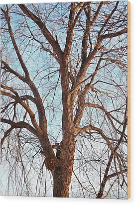 Wood Print featuring the photograph Winter Light by Chalet Roome-Rigdon
