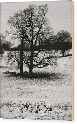 Winter Oaks Wood Print by John Colley