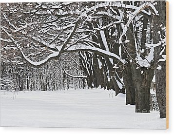 Winter Park With Snow Covered Trees Wood Print by Elena Elisseeva