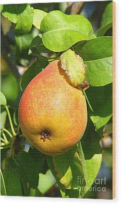 Winter Pear 1 Wood Print
