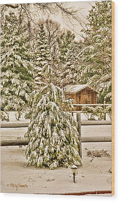 Wood Print featuring the photograph Winter Pine by Mary Timman