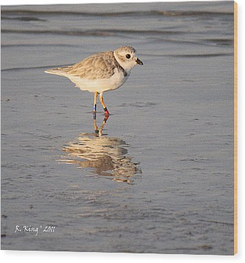 Winter Piping Plover Banded 2 Wood Print by Roena King