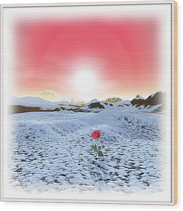 Winter Rose Wood Print by Harald Dastis