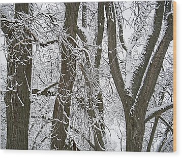 Winter Trees  Wood Print by Aimee L Maher Photography and Art Visit ALMGallerydotcom