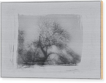 Winter Trees Wood Print by David Ridley