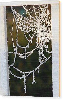 Wood Print featuring the photograph Winter Web by Paula Tohline Calhoun