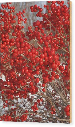 Winterberries Wood Print by Michael Flood