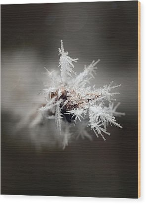 Winters Frost Wood Print by Cherie Duran