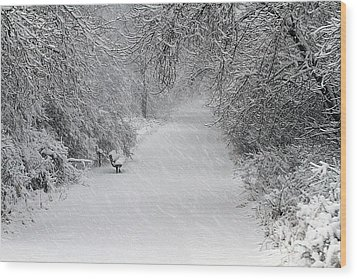 Wood Print featuring the photograph Winter's Trail by Elizabeth Winter