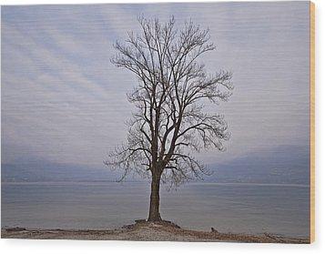Wintertree Wood Print by Joana Kruse