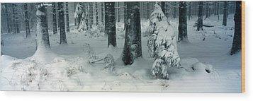 Wintry Fir Forest Wood Print by Ulrich Kunst And Bettina Scheidulin