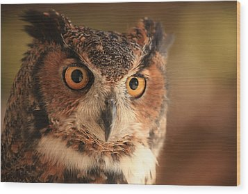 Wood Print featuring the photograph Wise Old Owl by Doug McPherson
