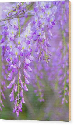 Wisteria Flowers In Bloom Wood Print by Natalia Ganelin