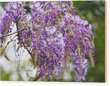 Wood Print featuring the photograph Wisteria by Joan Bertucci