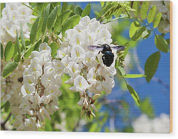 Wisteria With June Bug Wood Print