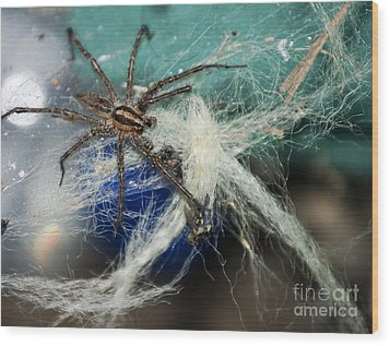 Wolf Spider Eating Wood Print by Art Hill Studios