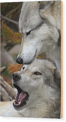 Wood Print featuring the photograph Wolf Talk by Steve McKinzie