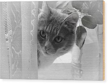 Wondering. Kitty Time Wood Print by Jenny Rainbow