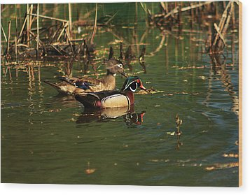 Wood Print featuring the photograph Wood Duck Pair by Josef Pittner