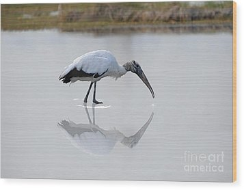 Wood Print featuring the photograph Wood Stork Eating by Dan Friend
