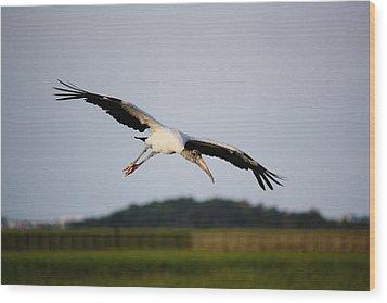 Wood Stork In Flight Wood Print by Paulette Thomas