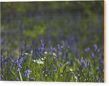 Wood Print featuring the photograph Woodland Flowers by Trevor Chriss