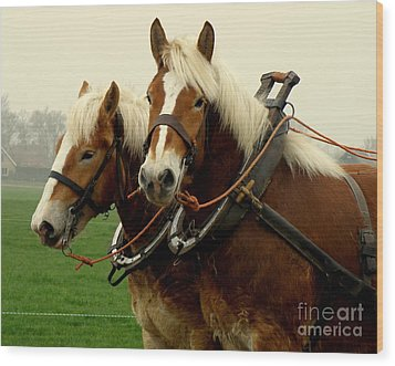 Wood Print featuring the photograph Work Horses by Lainie Wrightson