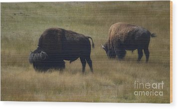 Wyoming Buffalo Wood Print by Donna Greene