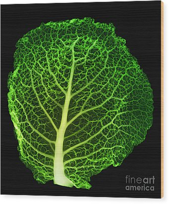X-ray Of Cabbage Leaf Wood Print by Ted Kinsman