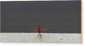 X Wing Dragonfly Wood Print by Nola Lee Kelsey