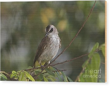 Wood Print featuring the photograph Yellew Vented Bul Bul  by Gary Bridger